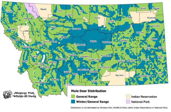 Mule Deer  Montana Field Guide