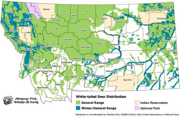 White Tailed Deer Montana Field Guide