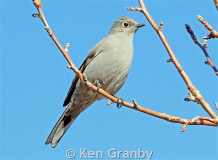 Townsend`s Solitaire