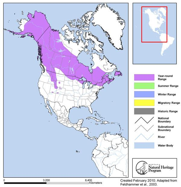 Moose Montana Field Guide - Montana in the us map